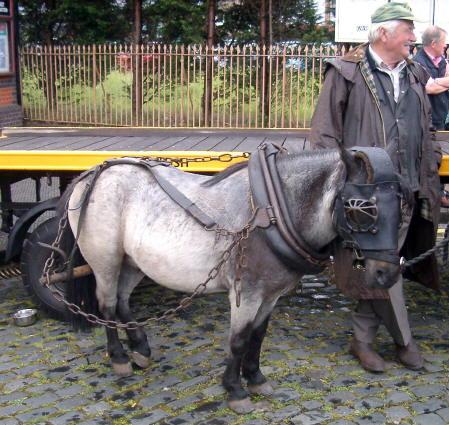 cheval de trait miniature