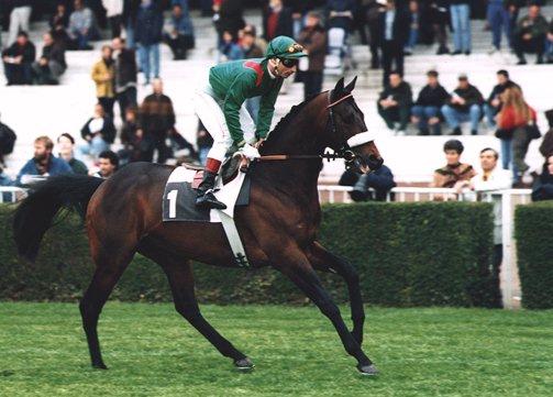 cheval arabe de course